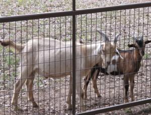 Golden Acres Ranch, Monticello, GA