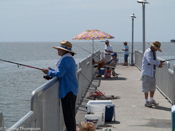 Don t have a boat give cedar key s fishing pier a try for Cedar key fishing