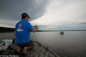 """Fishing rods rigged with """"snatch hooks"""" are used to hook wary gators"""