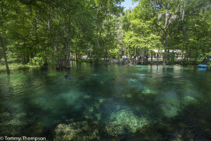 There are several springs at Ginnie Springs.   Each has a different look!