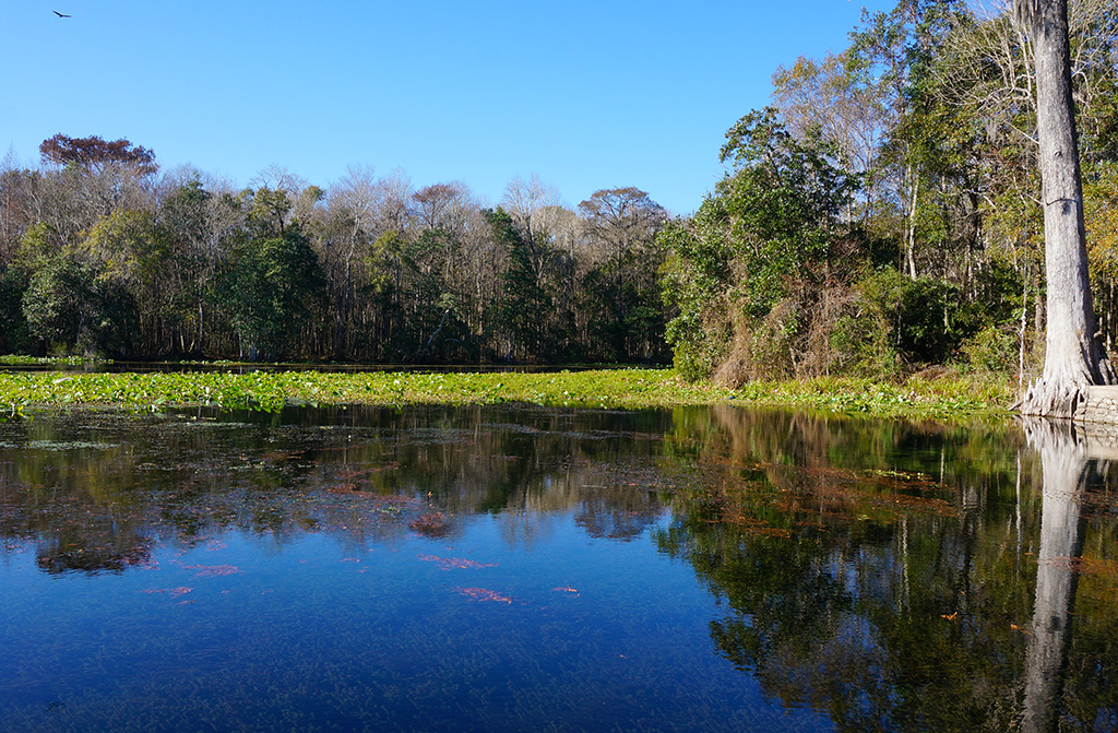 Panorama at Wacissa Springs, birthplace of the Wacissa River in Jefferson County Florida
