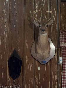You never know who you'll meet at Cross City's Cypress Inn.