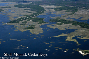 The waters near Cedar Key, in Levy County, are typical.  Expect lots of shell bars, islands, creeks and scenic views!