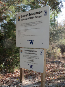 The Dixie Mainline road is managed as part of the Lower Suwannee National Wildlife Refuge
