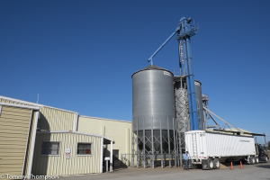 Williston Peanuts is located at 1309 SW7th Street in Williston (Just off SR121),  in Levy County.