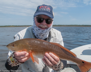 Expect to find redfish like this one close to Big Bend shorelines, especially on high tides!