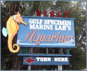 Don't miss Panacea's Gulf Specimen Marine Lab at