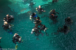 Blue Grotto Springs' crystal clear and constant 72-degree water is a great place to SCUBA or cave dive...
