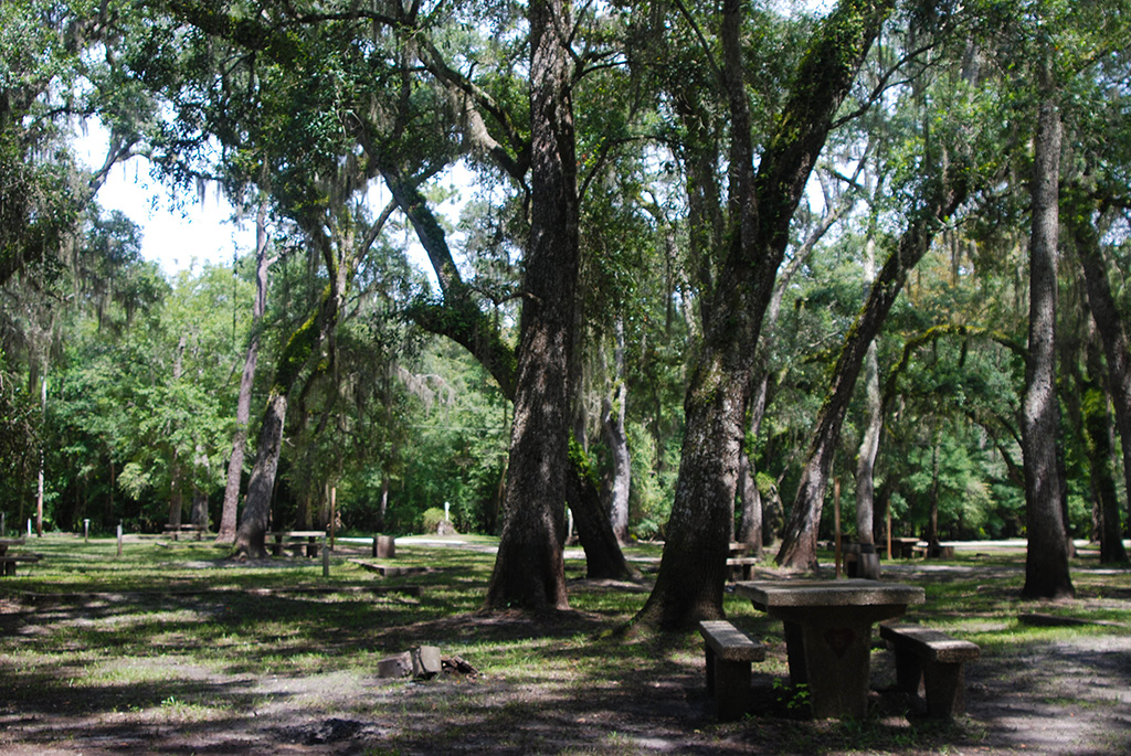 Primitive campground under the oaks
