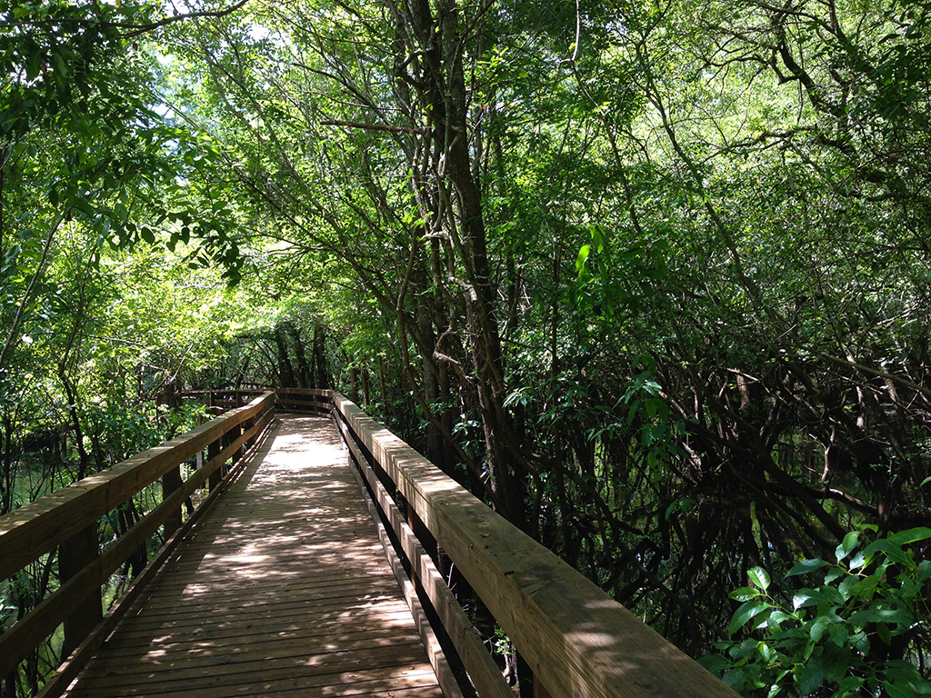 Along the park's wheelchair accessible boardwalk