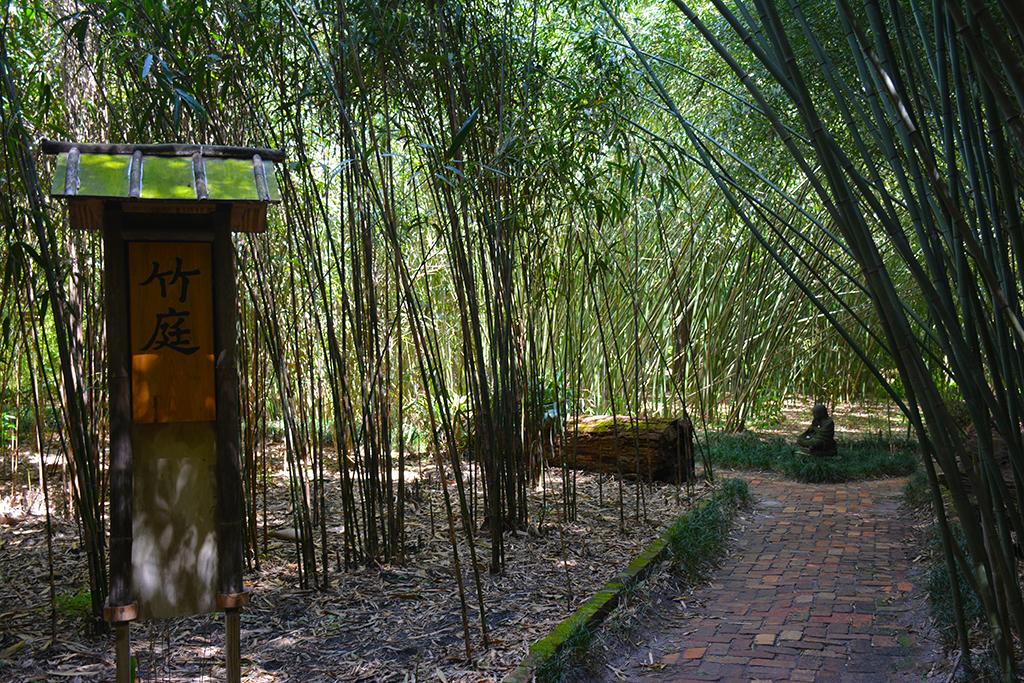 Bamboo and Buddah