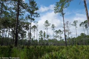 Expect to see pine forest reclamation in several areas of the park.