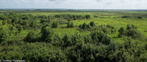 The view of Paynes Prairie from the observation tower, looking north.