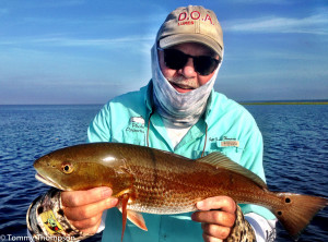 Redfish are a popular inshore fish species on Florida's Big Bend