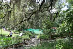 Fanning Springs State Park is located at the confluence of US19/98 and the mighty Suwannee River in Natural North Florida