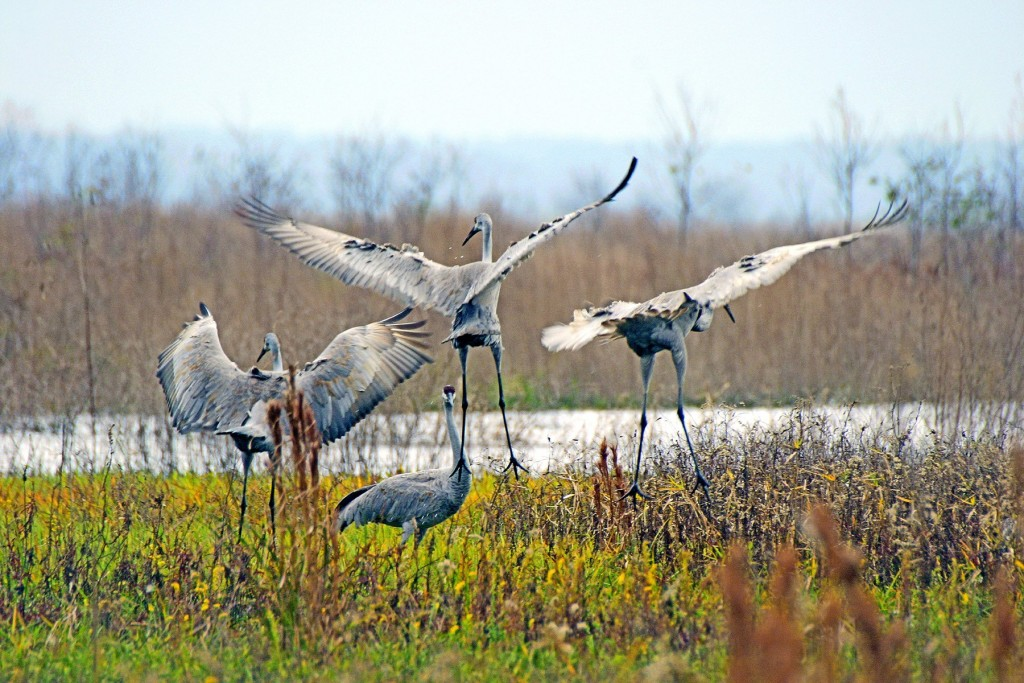 paynes-prairie-preserve-state-park