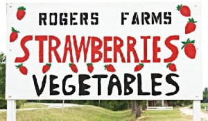 To get to Rogers' Farm: Take SR 121 N. From Gainesville to NW 156 Ave. Phone: 386-462-2406
