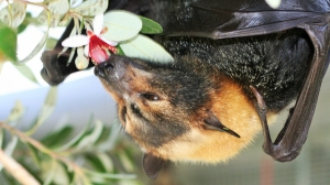 10th Annual Florida Bat Festival