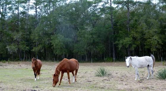 R.O. Ranch Equestrian Park