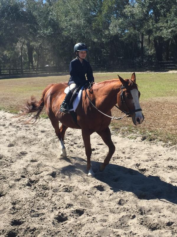 Madonnas Equestrian Academy
