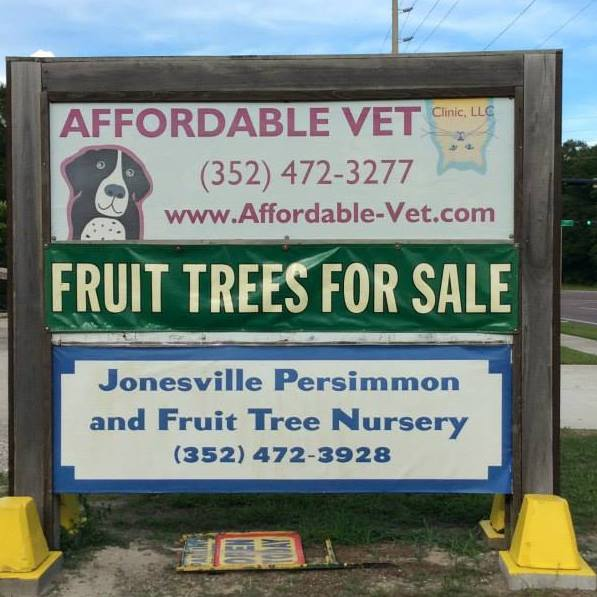 Jonesville Persimmons