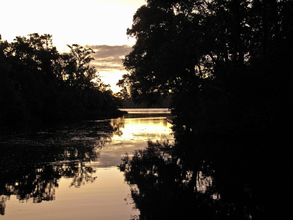 On the Suwannee River in Dixie County (3)