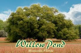 Willow Pond Plantation