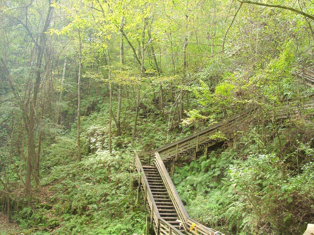 devils-millhopper-geological-state-park