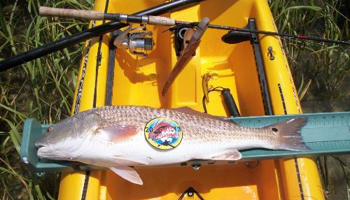 4th Annual Nature Coast Challenge: A Kayak Fishing Tournament - Yankeetown