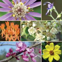 Spring Native Plant Sale at Morningside Nature Center
