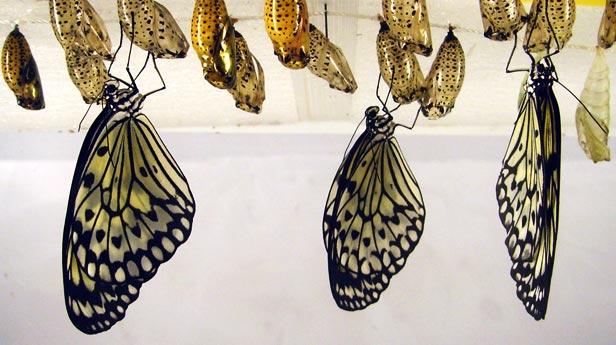 The Butterfly Festivus!