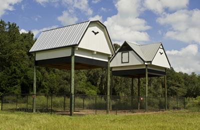 University of Florida Bat House