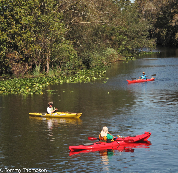Paddle the mighty Suwannee River, which straddles Dixie and Levy Counties