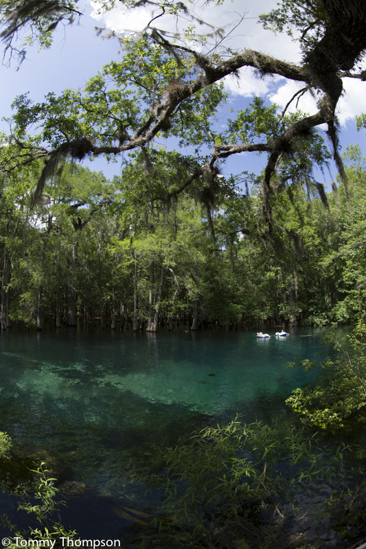 Manatee Springs on the Suwannee River