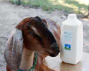 Serenity Acres Farm and Goat Dairy