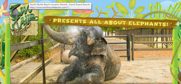 Elephant Appreciation Day at Two Tails Ranch