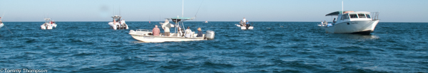 When the spring mackerel run begins, look for crowds of boats and birds!