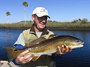 Redfish are common catches in our Big Bend coastal creeks.  Just look for structure like oyster bars.