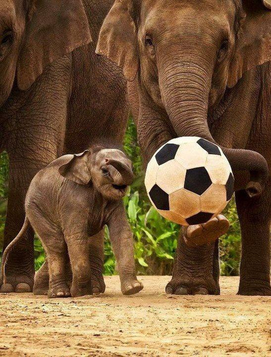 Elephant Appreciation Days