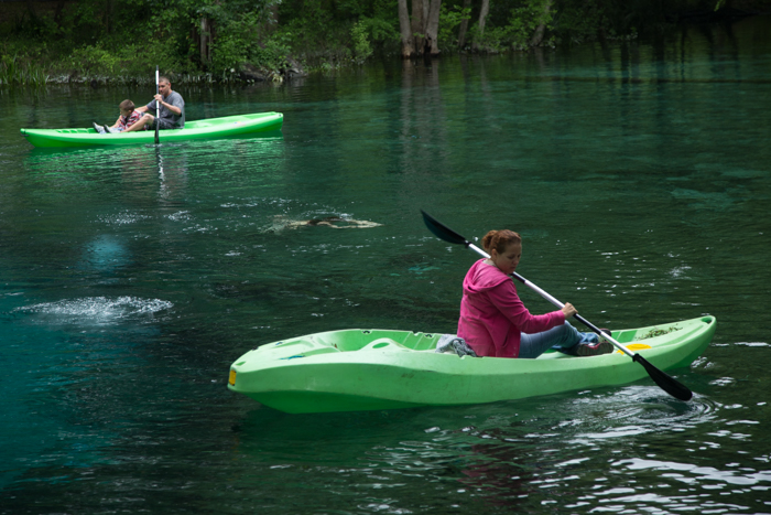 Visit Springs Along The Santa Fe River in Columbia, Gilchrist and Alachua County