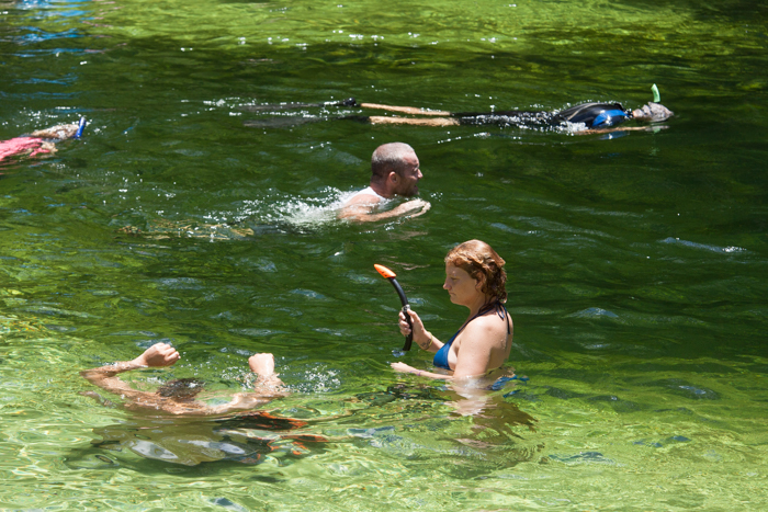 Three Natural North Florida Springs--Free For All!