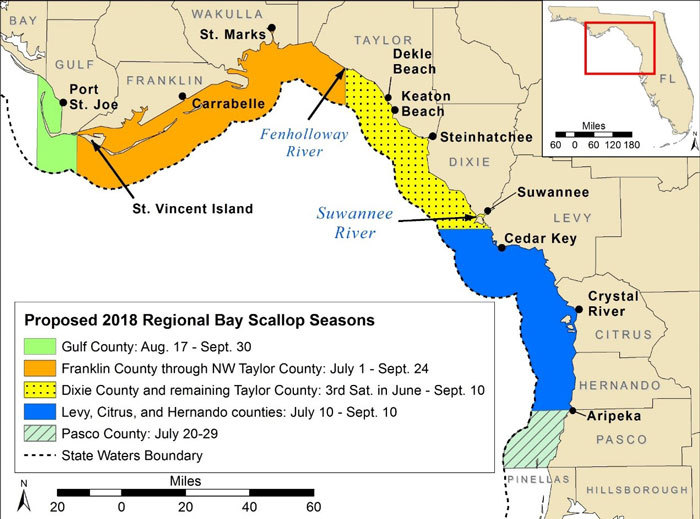 Plan Ahead For 2018--FWC discusses regional bay scallop seasons on Big Bend