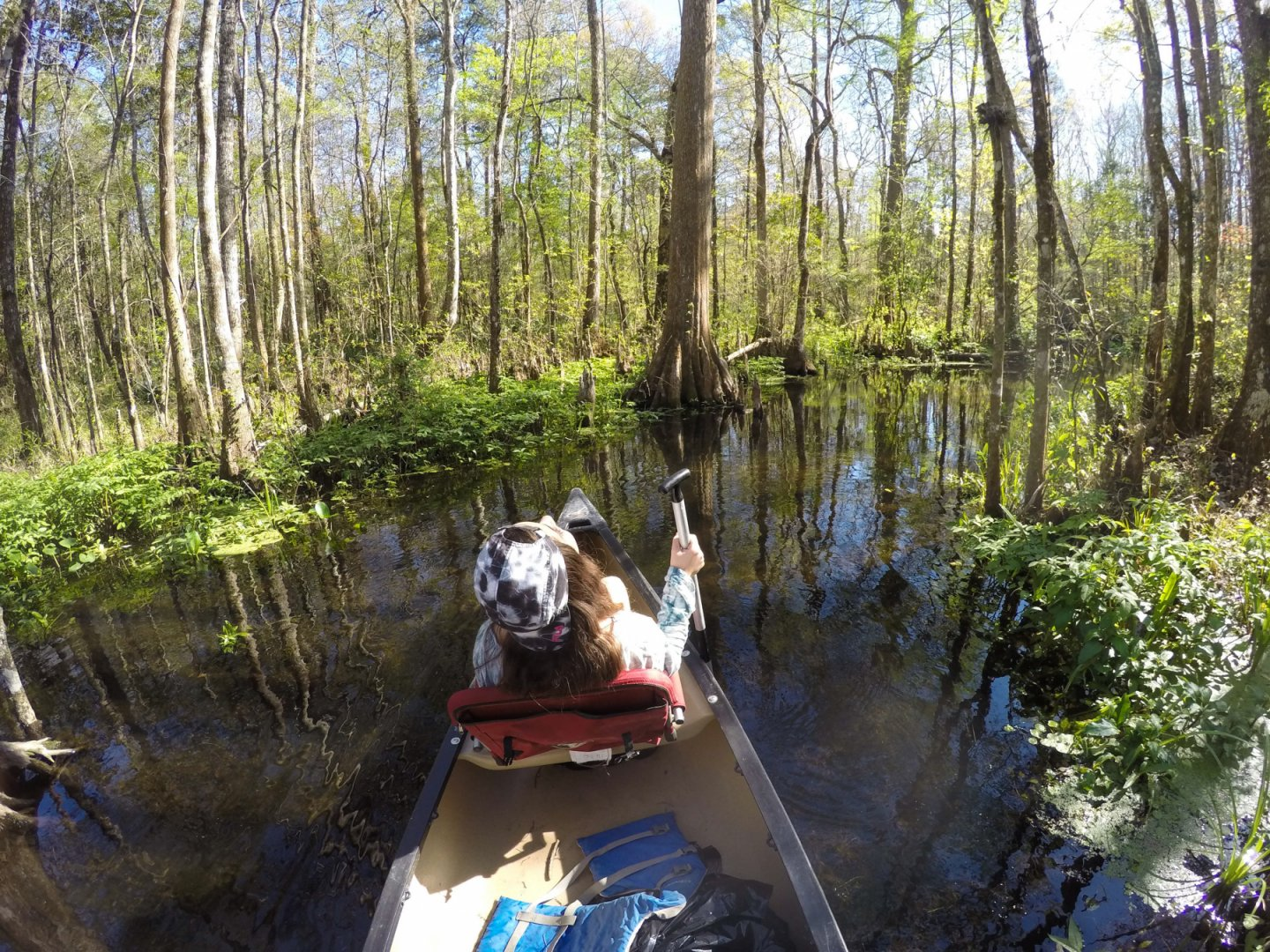 Wacissa River Canoe and Kayak Rentals