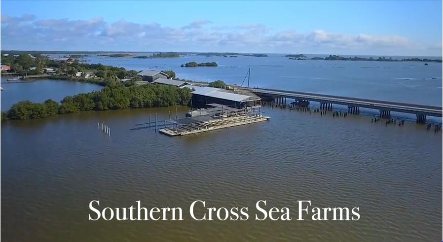 Southern Cross Sea Farms, Inc