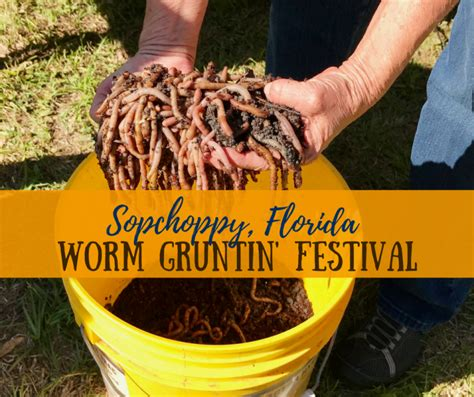 Sopchoppy Worm Gruntin' Festival---A Unique Experience in Natural North Florida, April 14, 2018