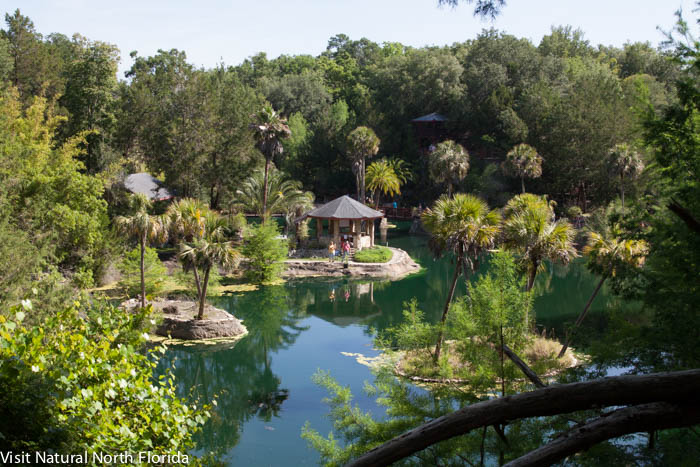 Visit Cedar Lakes Woods & Gardens Near Williston, Florida--It's the Pits!