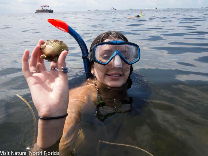 Natural North Florida's 2018 Bay Scallop Season Opens Soon!
