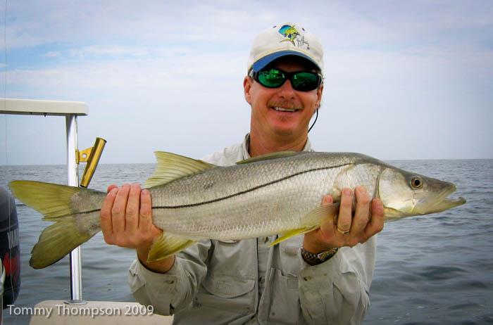Sportfish Alert!   Snook Continue Northward Migration Into Big Bend Waters As Winters Warm