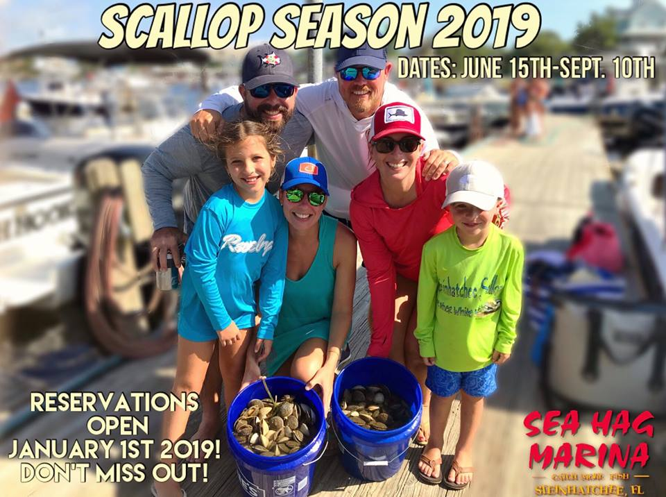 Florida's 2019 Recreational Scallop Season, at Steinhatchee, Opens June 15th....Reserve Your Lodging at Sea Hag Marina 1/1/19~