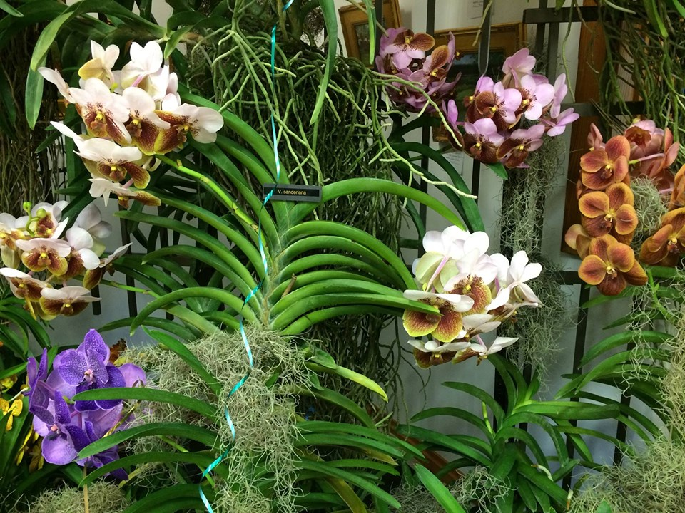 Fall Plant Sale & Orchid Show